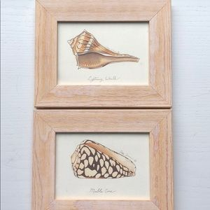 2 framed prints of shells